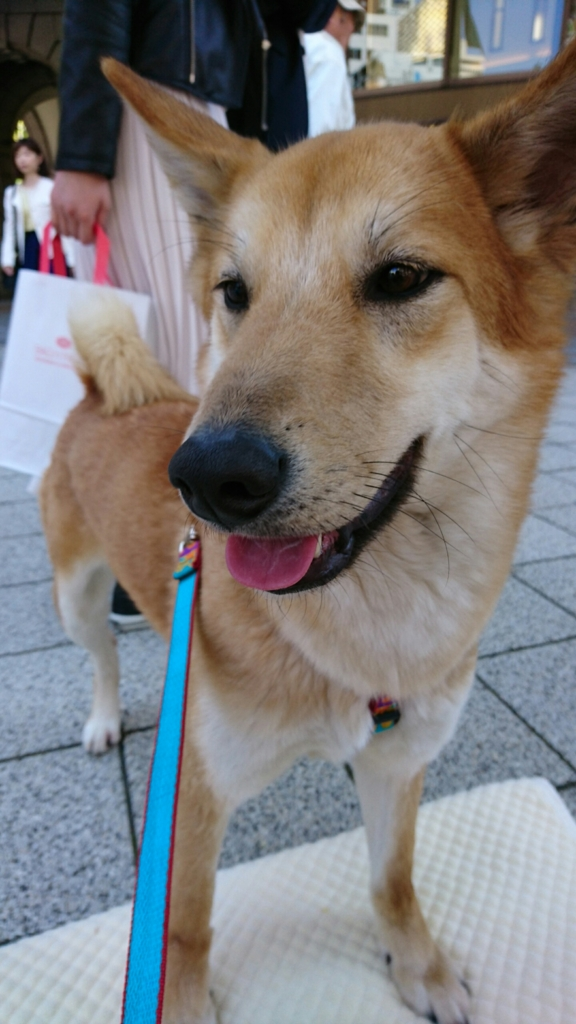f:id:japanrescue1995:20170424100933j:plain