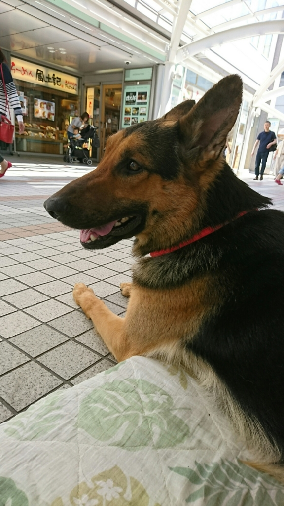 f:id:japanrescue1995:20170528174918j:plain