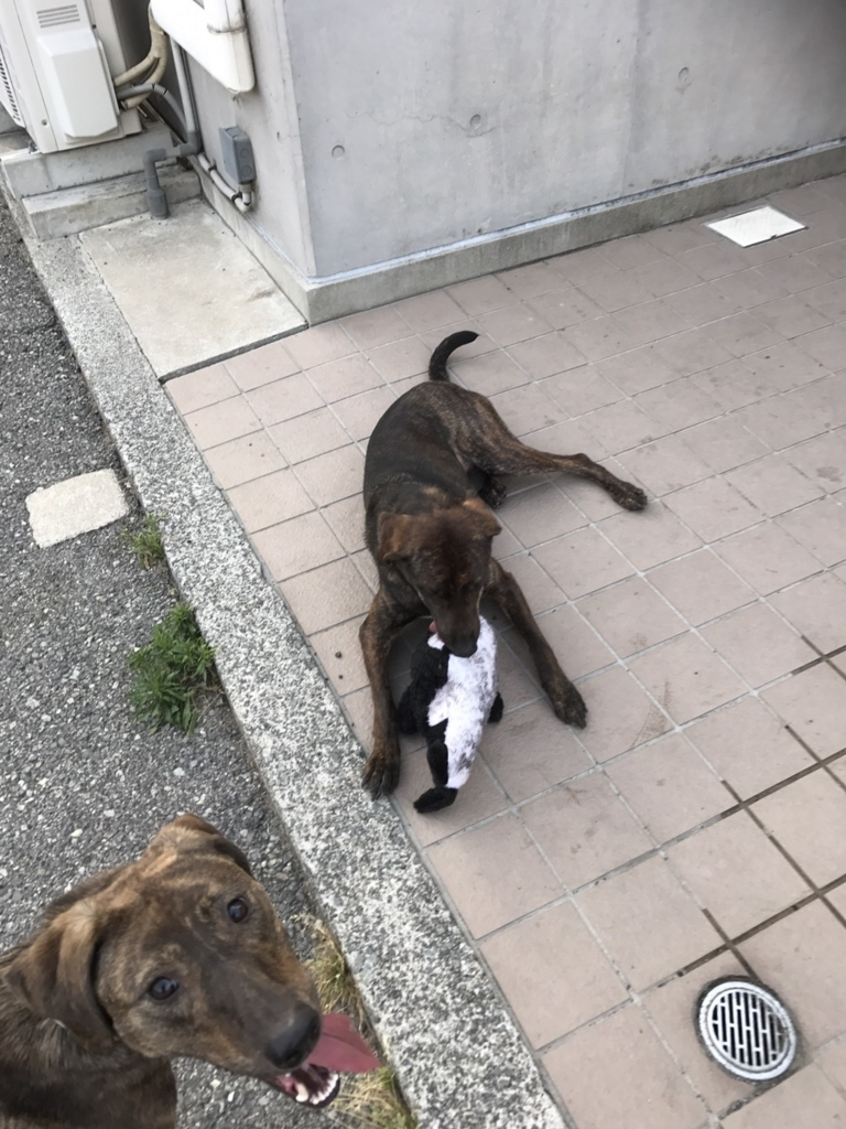 f:id:japanrescue1995:20170603135359j:plain