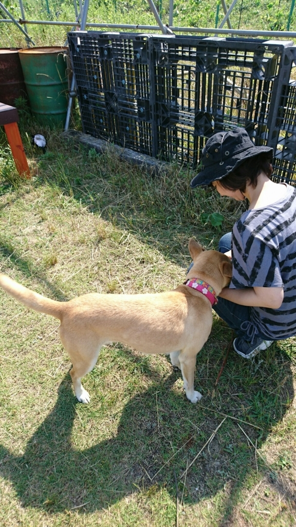 f:id:japanrescue1995:20170617175648j:plain