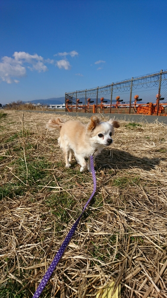 f:id:japanrescue1995:20180205133029j:plain