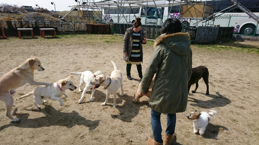 f:id:japanrescue1995:20180303130541j:plain