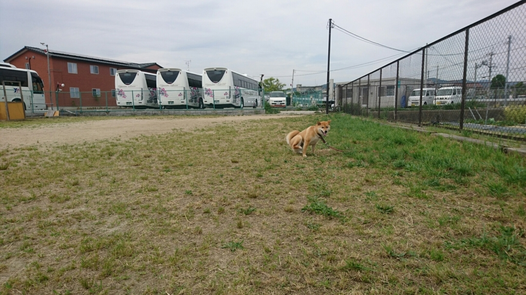 f:id:japanrescue1995:20180528164925j:plain