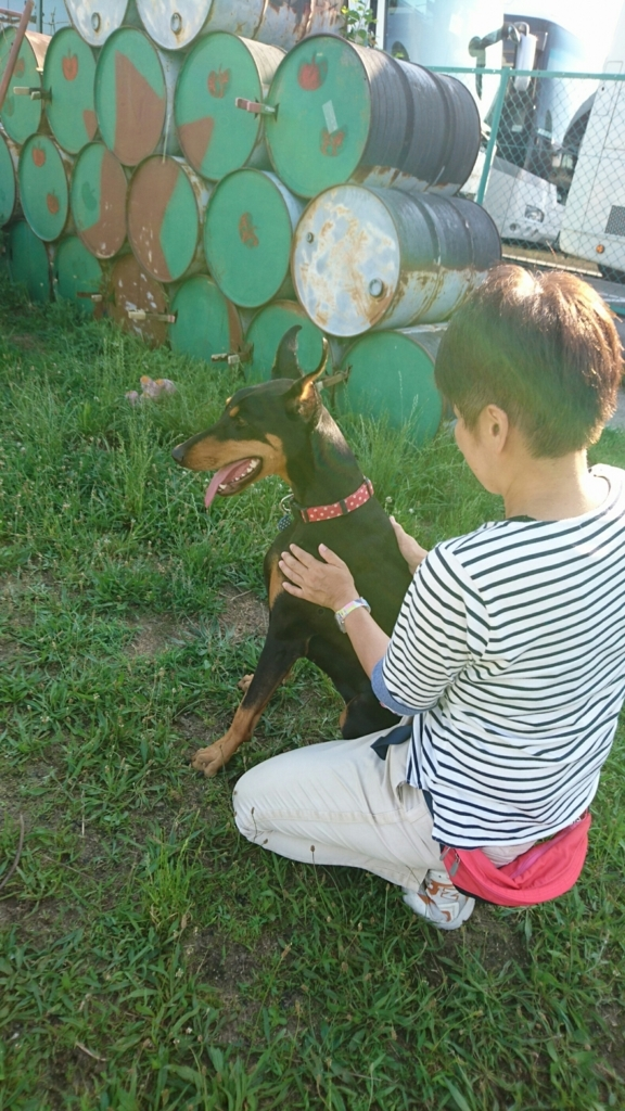 f:id:japanrescue1995:20180625195142j:plain