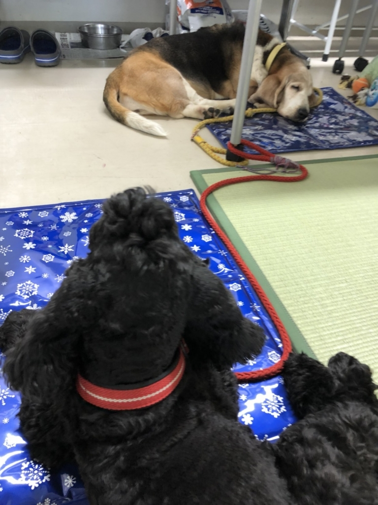 f:id:japanrescue1995:20180716083100j:plain