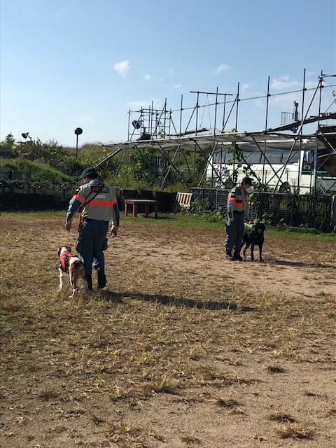 f:id:japanrescue1995:20181113093938j:plain