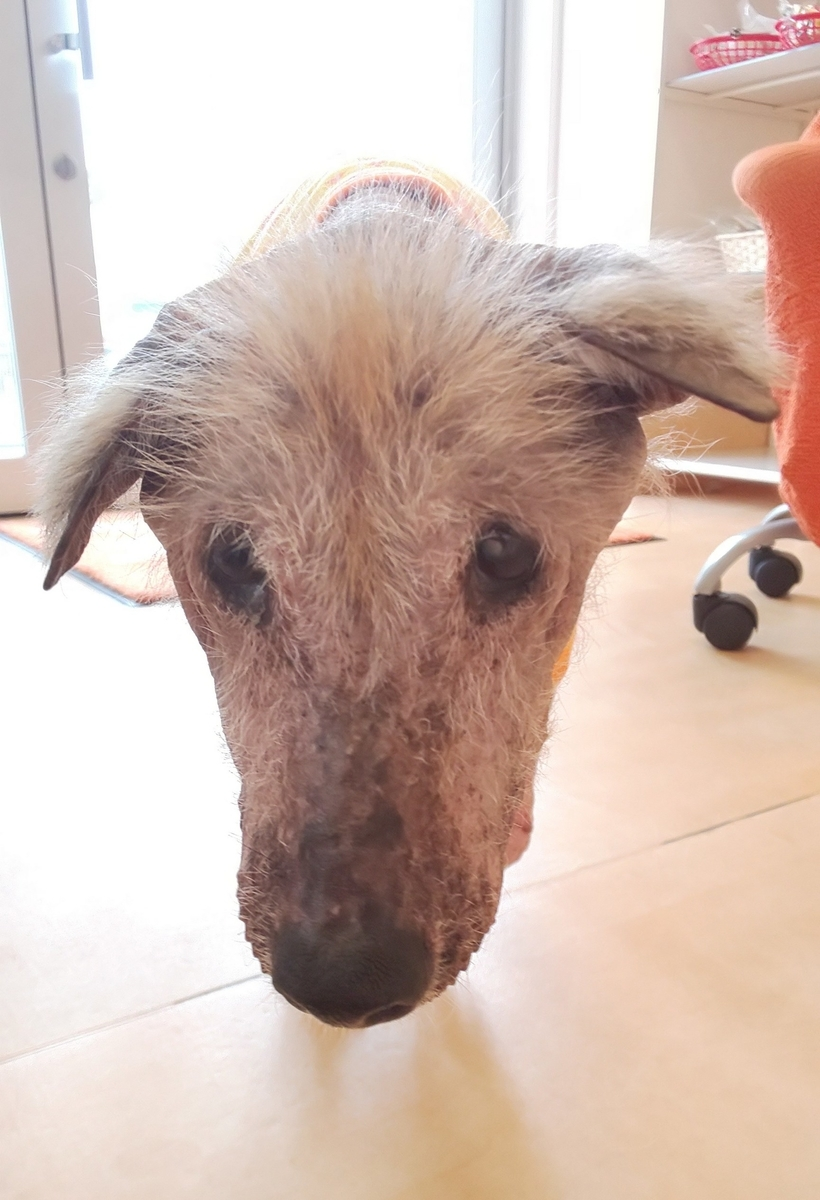 f:id:japanrescue1995:20190810103920j:plain
