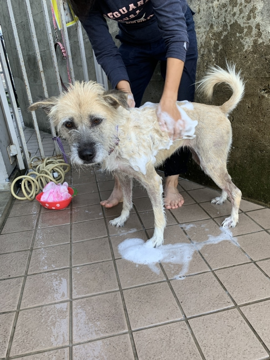 f:id:japanrescue1995:20191006132545j:plain