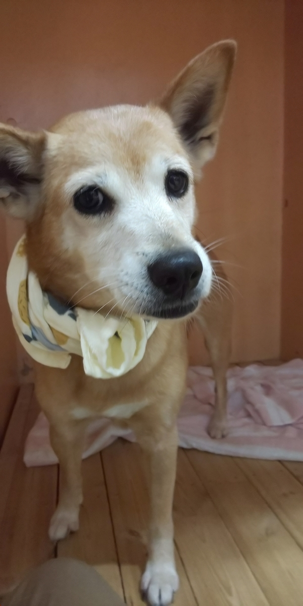 f:id:japanrescue1995:20200725141143j:plain