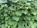 [テクスチャ][植物]