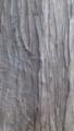 [テクスチャ][植物][樹皮]