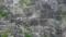 [テクスチャ][壁][石][草]