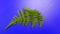 [テクスチャ][植物][ブルーバック]