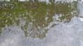 [テクスチャ][地面][草][苔]