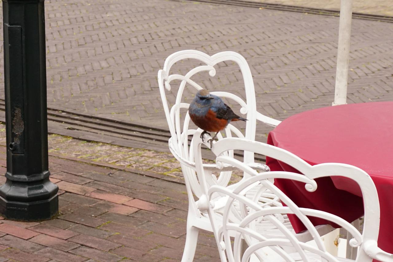 ハウステンボスの鳥