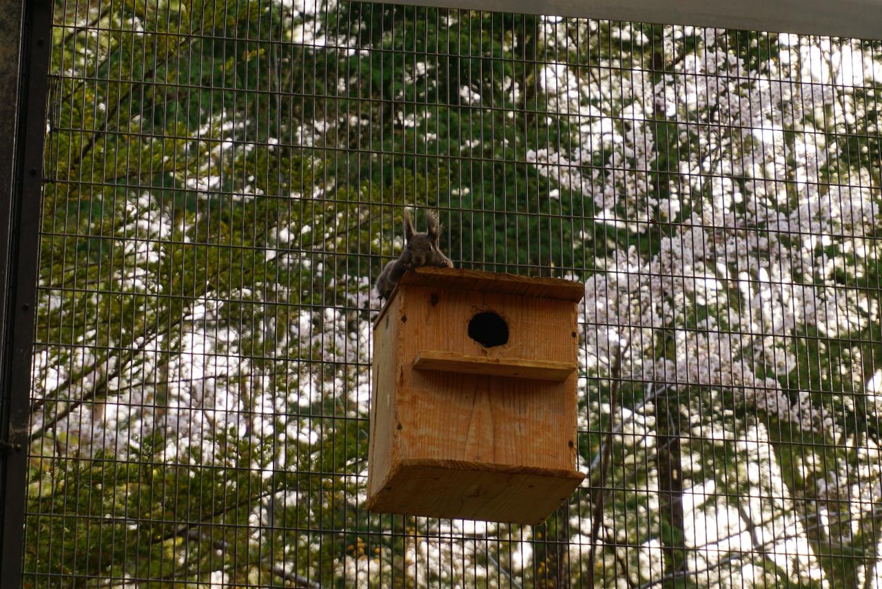 リスの巣箱