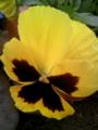 [200910][花]