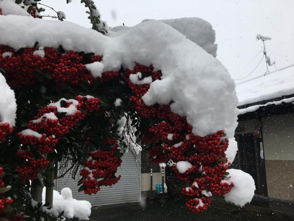 ピラカンサの雪の風景