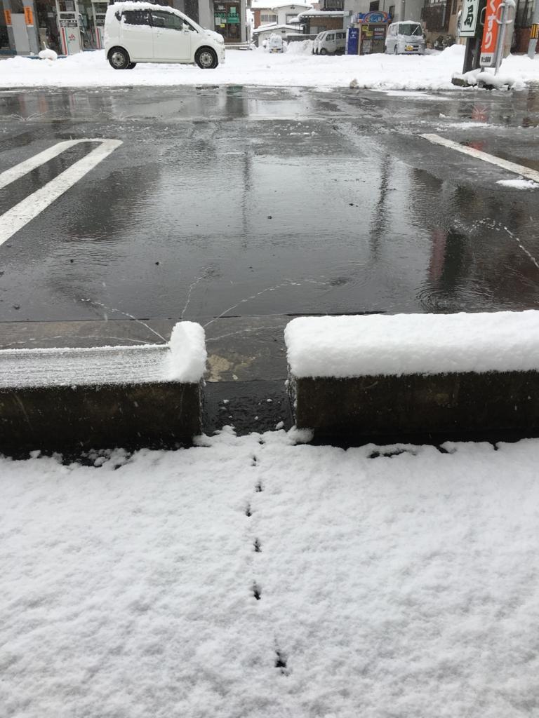 薬局前の雪の上にもセキレイの足跡が