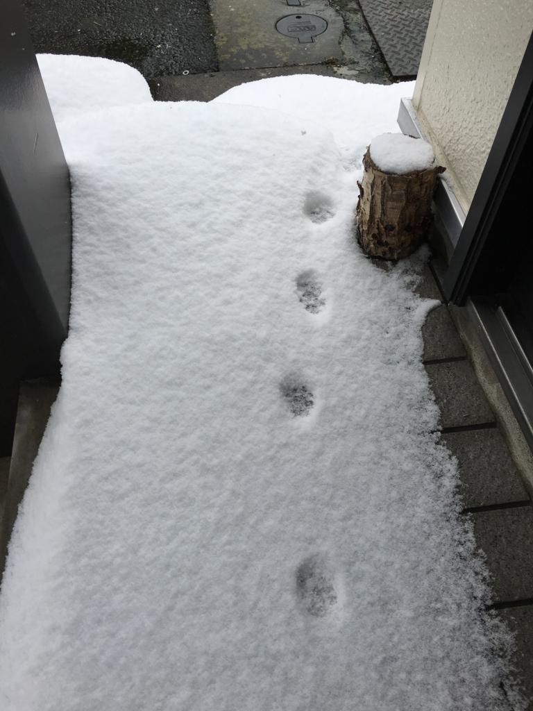 猫の足跡のプレゼント