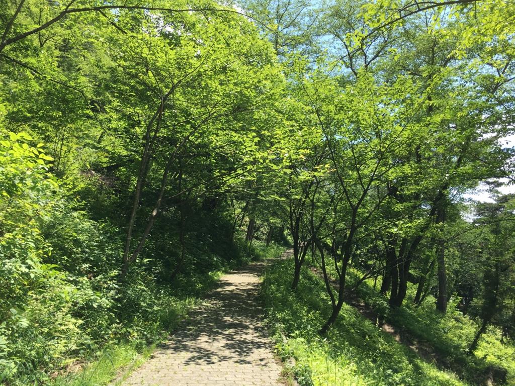 若木山の新緑がキレイな季節です