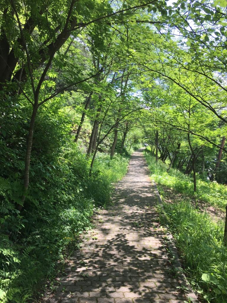 若木山を登る道