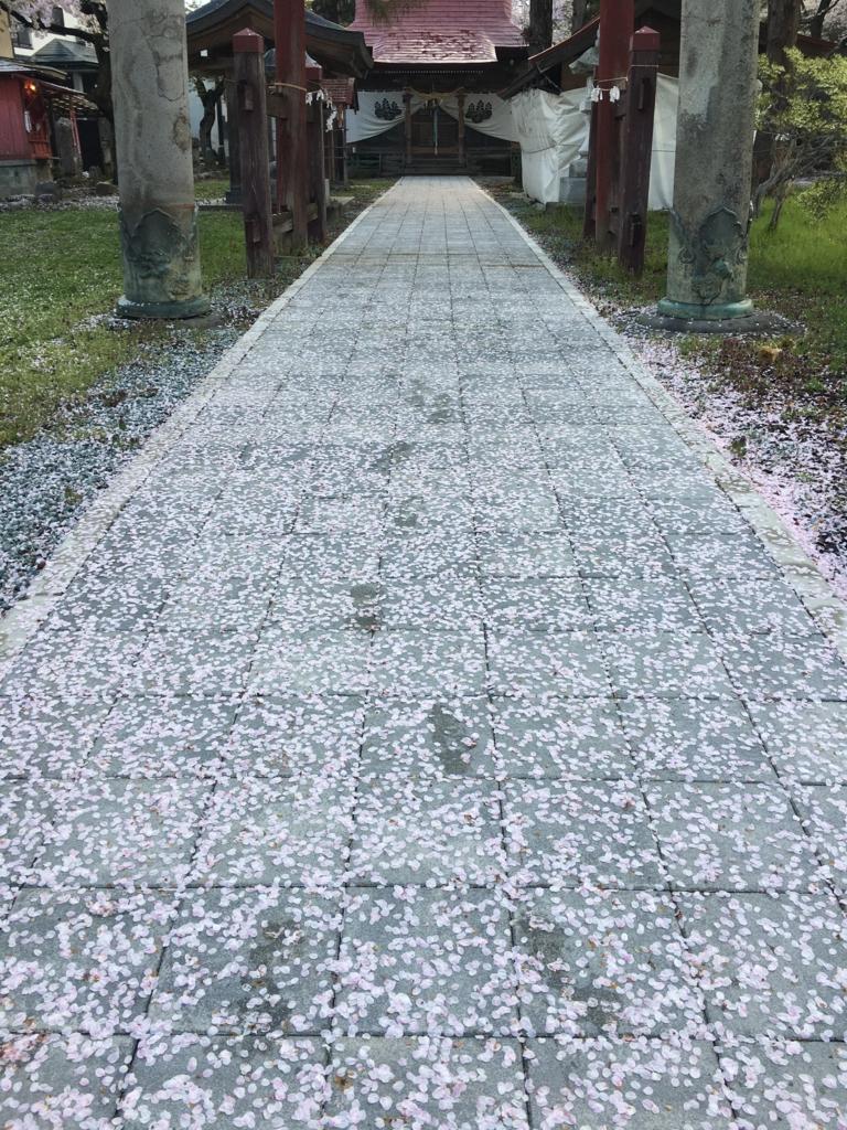 若木神社桜が散りました