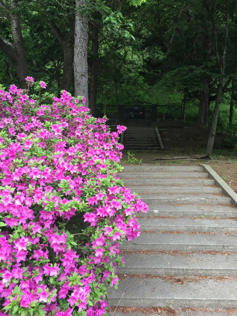 赤い皐月の若木山公園