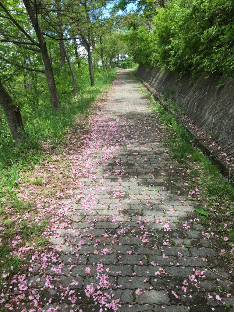 若木山の山道、八重桜が散りました