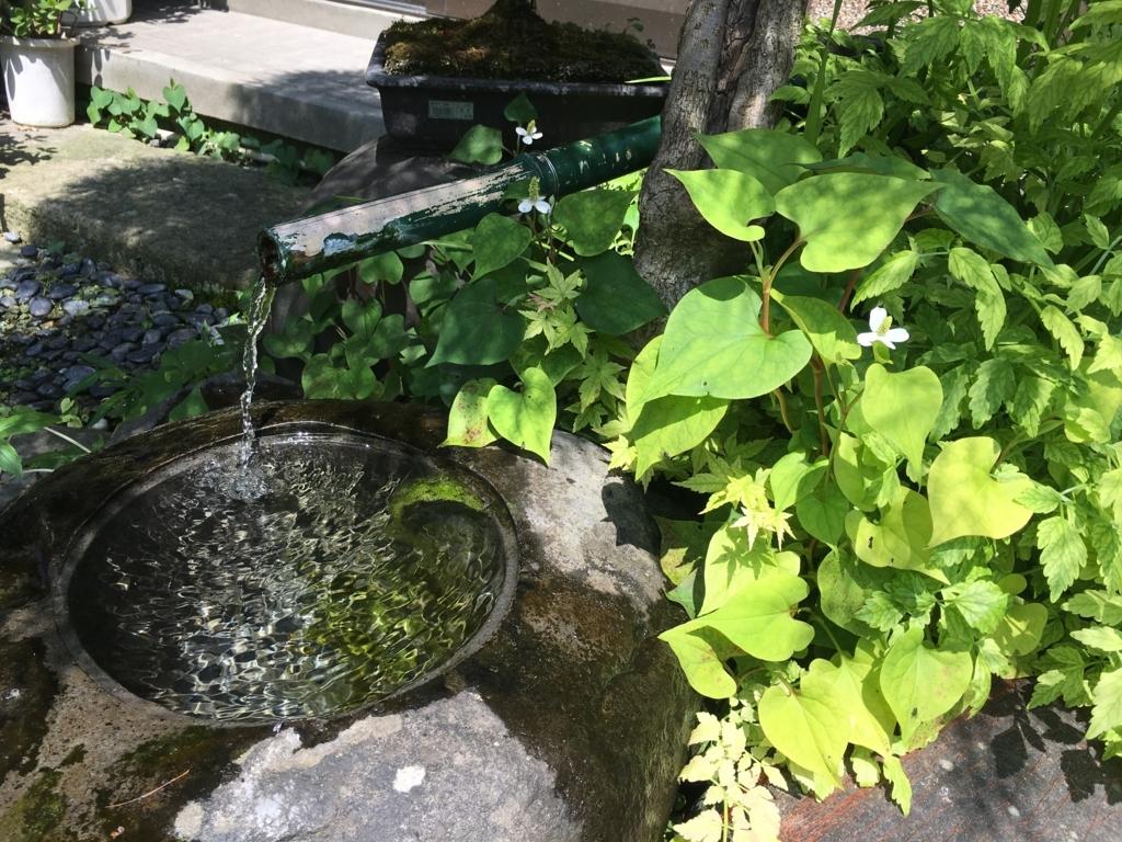 池とドクダミの花