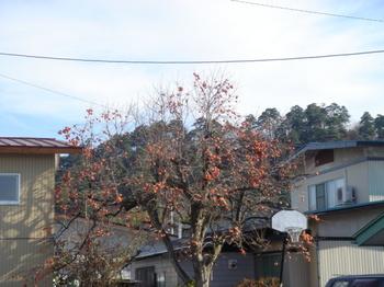 「鳥たちの冬の餌になる柿を背景に見える若木山」