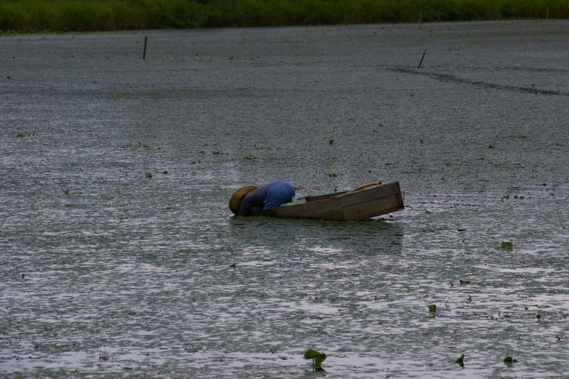 ジュンサイ沼