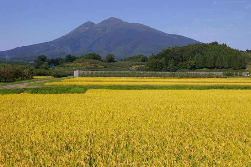 岩木山と田んぼ 新岡付近