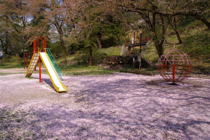 桜じゅうたんの若木山公園