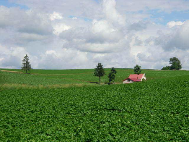 北海道美瑛 「赤い屋根のある丘陵」
