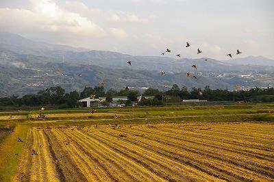 そこに鳥たちが空へパッと飛び出します。 title=