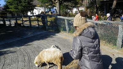 那須塩原 南ヶ丘牧場 羊ちゃんたち