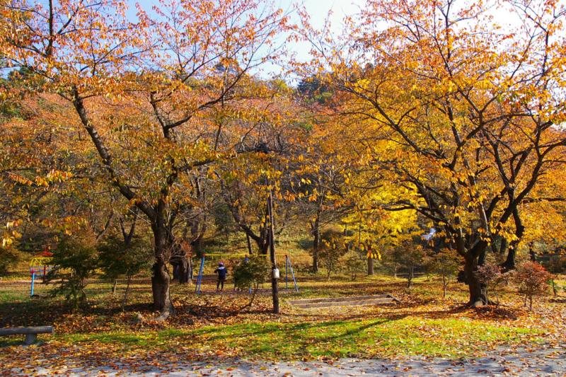 若木山公園 暮ゆく秋