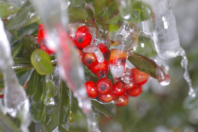 我が家の庭 「凍る」