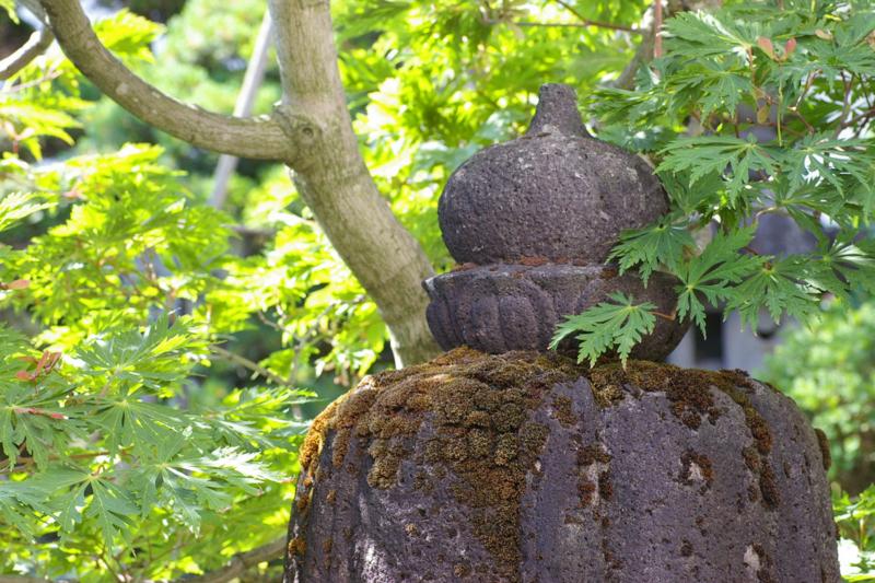 我が家の庭 石灯篭と新緑のハウチワカエデ