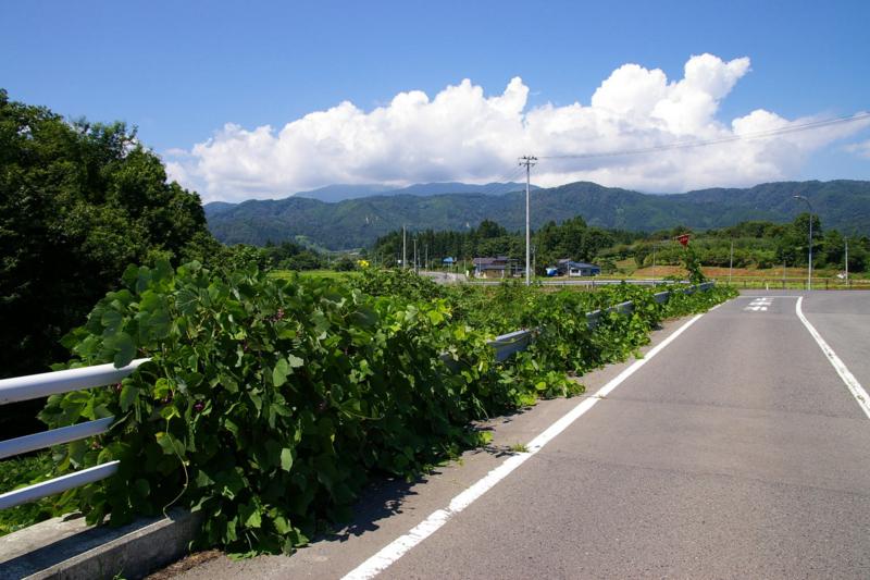 村山市の夏の道路の風景、入道雲