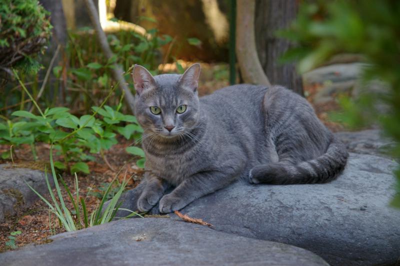 我が家の庭に迷い猫ちゃんがやってきた!