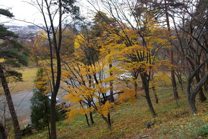 若木山公園の銀杏の木