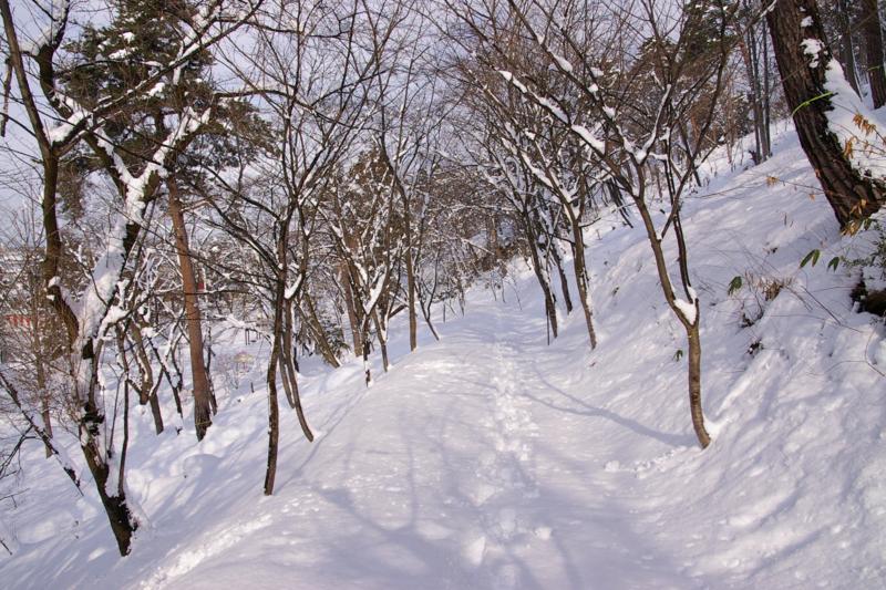冬の若木山を登りました
