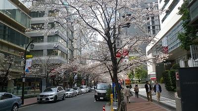 日本橋、桜が綺麗に咲いていて満開でした!