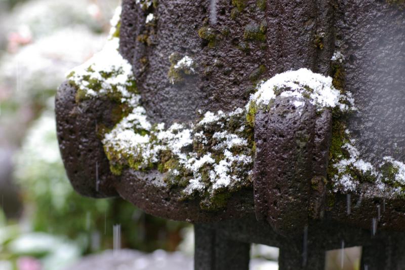 4月の春の淡雪
