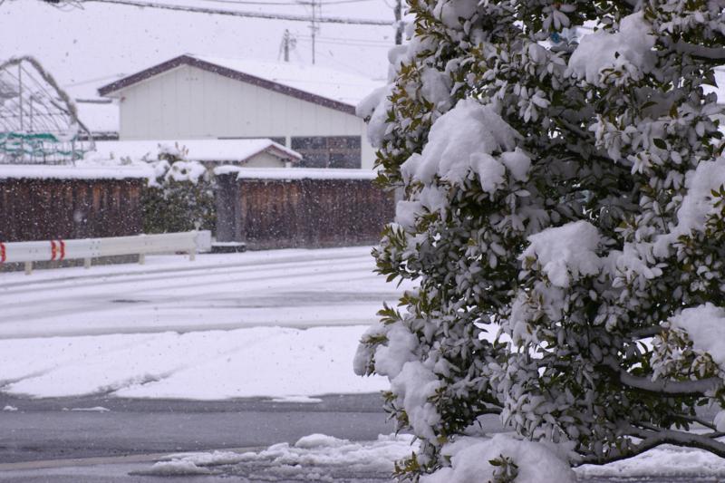 土屋薬局駐車場の雪景色