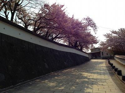 東根小学校の桜満開