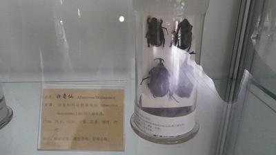 カブトムシも漢方薬になるとは知りませんでした。