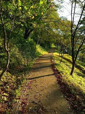 若木山の上り路